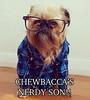 chewbacca dog (gith75) Tags: dog shirt glasses funny chewbacca
