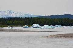 Icebergs (Steve Schar) Tags: alaska nikon mendenhallglacier juneau iceberg icebergs 2014 mendenhalllake nikongp1 nikond7100