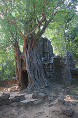 angkor wat, Cambodia, Ian Wade (Disorganised Photographer - Ian Wade - Travel, Wil) Tags: temple asia cambodia south east jungle angkor watt