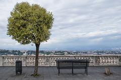 Tree in Naples (Vincent Claus) Tags: bench view napoli naples arbre vue banc