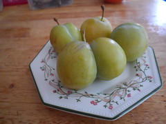 Greengage fruit (Seyra-tut) Tags: greengage