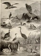 Anglų lietuvių žodynas. Žodis quail brush reiškia putpelių brush lietuviškai.