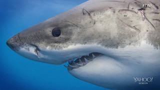 Close-up shark photos aim to break 'Jaws' stereotype: George's research took him to Isla Guadalupe, an island located off the coast of Baja California known for its Great White Shark sightings. He bought a camera with waterproof housing ...