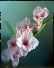 L.RFP50.201407.04 (zampras) Tags: film fuji 4x5 sheet fujichrome f28 schneider 150mm xenotar 15028 rfp50