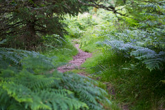 Hidden Path (eye pad) Tags: canon woodland path devon dartmoor 2470f28l 5dmk3
