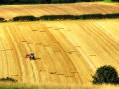 Harvest Time, baling the straw (robin denton) Tags: tractor field rural countryside nationalpark britain farm yorkshire farming harvest northyorkmoors agriculture bales northyorkshire harvesting robinhoodsbay ravenscar