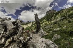 Madone de Fenestre (06) (Dany-de-Nice) Tags: sky cloud mountain france flower nature fleur clouds montagne ciel trunk nuage nuages 06 tronc mercantour 6d alpesmaritimes 1635mm vsubie madonedefenestre