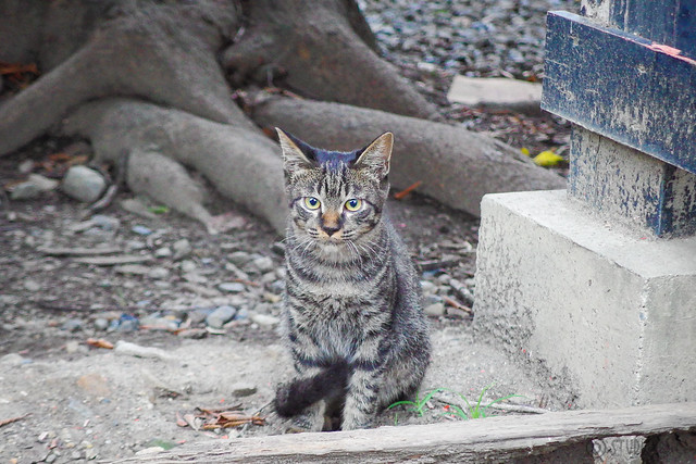 Today's Cat@2014-08-29