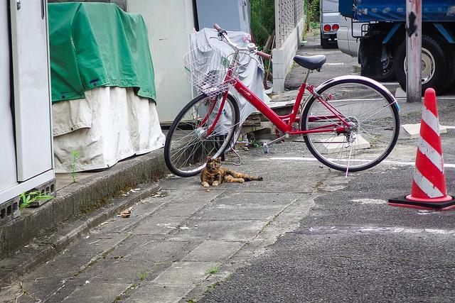 Today's Cat@2014-08-13