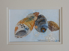 "Shell Trio <a style=""margin-left:10px; font-size:0.8em;"" href=""https://www.flickr.com/photos/66157425@N08/14935183366/"" target=""_blank"">@flickr</a>"
