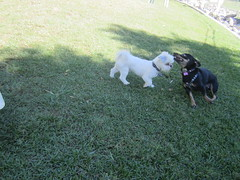 Ozmo's first trip to the Dog Park (3) (gerbet) Tags: california dog desert palmsprings ozmo