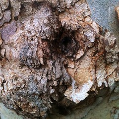 #treetexture #cool (morbidmayhem666) Tags: tree texture nature beautiful square nice bumpy squareformat rough coarse iphoneography instagramapp