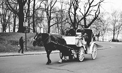 Carriage (Ardle Photo) Tags: city nyc trees bw horse newyork monochrome nikon carriage centralpark romantic