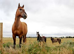 wyoupload2 (Outnmbrd 521) Tags: ranch summer horses canon wyoming t3i horsephotography