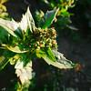 10 (Kais Saady) Tags: flowers ar iraq ramadi alanbar arramadi الرمادي الانبار kaislovers kaissaady kaissaadyphotography