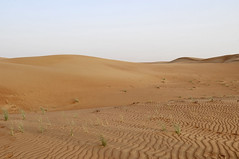 Sharjah (Crausby) Tags: nature photography sand desert dunes uae middleeast emirate sharjah lensblr photographyontumblr