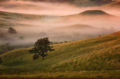 Prairie Oak and Fog at Sunrise (hunter20ga) Tags: fog sunrise northdakota prairie latesummer nikkor7020028 nikond4