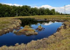 a kék tószem / the blue lake (debreczeniemoke) Tags: blue autumn pond lakeside transylvania bog transilvania tó erdély muskeg ősz kék tópart láp tőzegláp canonpowershotsx20is gutinhegység tăulchendroaiei gutinmountains