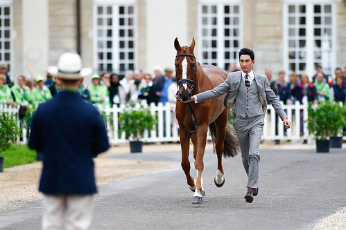 The trot-up at Haras Le Pin wearing Gieves & Hawkes Photo Xia Yuanpu