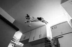 O pulo do gato (felipe sahd) Tags: city cidade cats brasil noiretblanc gatos fortaleza ceará felinos 123bw