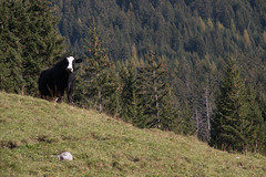 2014-09-26_0349.jpg (czav gva) Tags: switzerland derborance