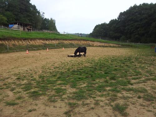 2014-09  11 11-41 Zajicek na koni