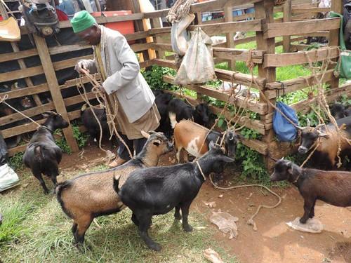 Goat farming training manual