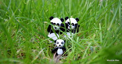 Panda hide /seek (mootzie) Tags: white black grass garden toys lego hide seek figures pandas