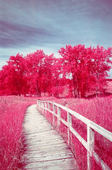 Port Crescent EIR (scott_z28) Tags: park trees color film nature mi landscape ir md minolta kodak path michigan dunes 28mm surreal slide infrared e6 f28 srt101 orange021 falsecolor eir 1443 saginawbay rokkor aerochrome portcrescent