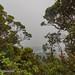 Mount Brinchang Cameron Highlands, Malaysia