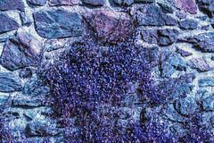 "Test Lomo Purple XP 100-400 mit Minolta 7000 • <a style=""font-size:0.8em;"" href=""http://www.flickr.com/photos/58574596@N06/14195628370/"" target=""_blank"">View on Flickr</a>"
