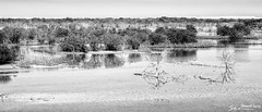 Mangroves at Purple Island (stewartl2010) Tags: bw water monochrome landscape middleeast mangroves qatar alkhor margins nikfilters purpleisland letterboxformat silverefexpro2