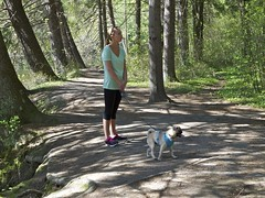 2014.05.17-16.07.04 (Pak T) Tags: dog pug leash bennett groton ddt zuikodigital olympus1260mm