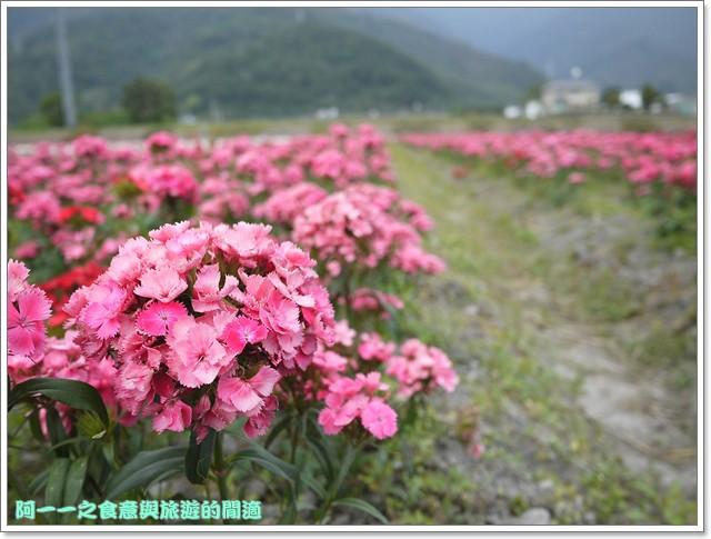 台東關山景點米國學校關山花海image013
