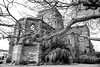 Unfinished church (halifaxlight) Tags: trees bw church ruin bermuda stgeorge historicalsite unfinishedchurch vanagram