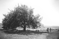 Keep some room in your heart for the unimaginable.   Mary Oliver (genevieve_males) Tags: summer two blackandwhite tree beautiful portland sweet earth pair air elena romantic pdx care idyllic ephemeral skidmore summerday 2014 totallyrad summery radlab skidmorebluffs genevievemales genevievesawyermales