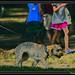 Dog Leading