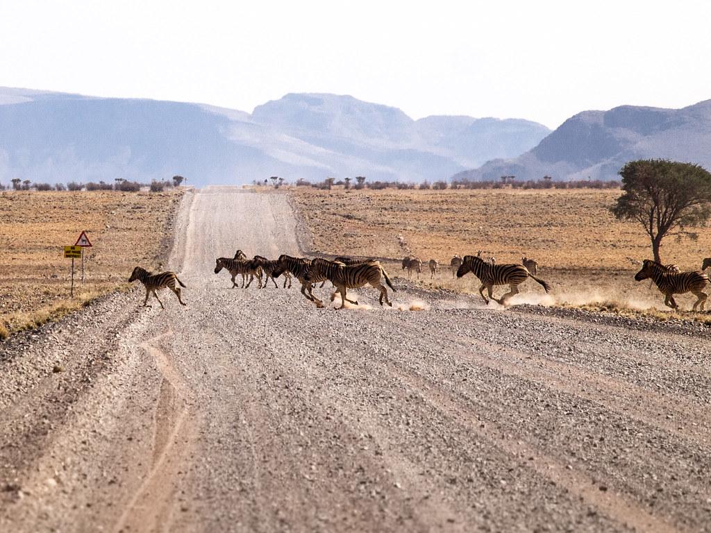 Zebra Crossing, NamibRand Nature Reserve, Namibia