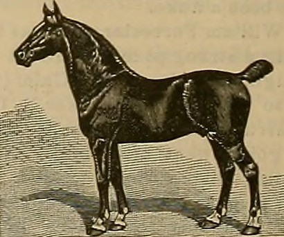 Image from page 329 of Breeder and sportsman (1882)