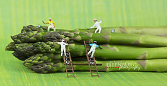 29/52 Painted Asparagus is Hard work (Ellenburg Photography) Tags: food green project with asparagus painters 52 minifigures