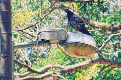 (victorcamilo) Tags: light brazil bird luz brasil canon lens ngc places pssaro pombo momento ave lugares moment goinia luminria goiania goias victorcamilo
