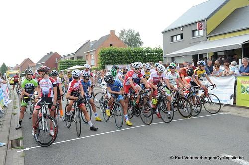 Geel Oosterlo  (33)