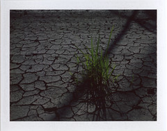 On your own (benjaflynn) Tags: light sunset shadow dusty film grass lines contrast analog rural vintage polaroid outside outdoors fuji shadows farm country farming dry farmland dirty retro dirt goop drought instant fujifilm farms daytime desaturated 1960s organic analogue manual manualfocus cracked underexposed shadowed landcamera foldingcamera crevices mudcracks peelapart primelens fujiroid fp100c twolayers polalove fujifp100c fixedfocallength mudcracked polaroidlandcameraautomatic230 auto230
