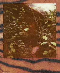 Gut versteckt # well hidden #  Polaroid_Impossible_Color600_Skins_Edition - Polaroid ImpulseAF 600  - 2014 (irisisopen f/8light) Tags: color film analog germany polaroid deutschland 600 motive impossible