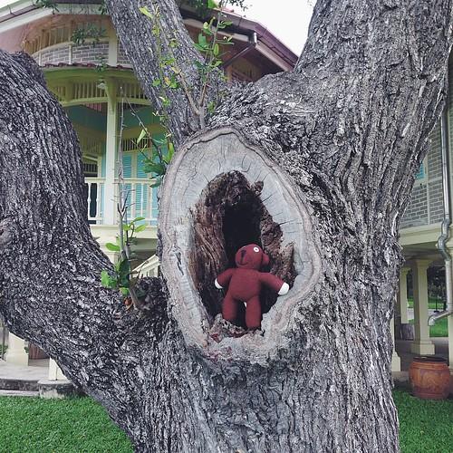 Teddy @ love and peace palace, Hua Hin #vscocam #thailand #teddy #travel