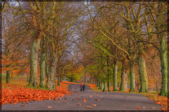 One Autumn Afternoon (SUPΣ®MΛN™) Tags: park uk travel autumn trees england sky art fall nature yellow bronze photoshop canon landscape geotagged gold nikon colours seasons leeds wideangle places tokina nik roundhaypark roundhay topaz lightroom niksoftware tokina1116mmf28 tokinaaf1116mmf28 nikond7000 mygearandme mygearandmepremium ringexcellence blinkagain autumn2013