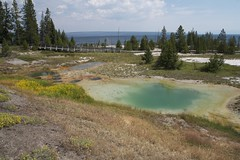 Pool (Nicolas -) Tags: travel usa lake tree nature pool america forest nationalpark holidays unitedstates roadtrip yellowstone westthumb 2014 nicolasthomas