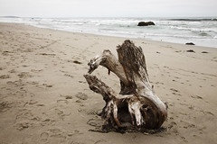 Drifted Here (al-ICE g) Tags: ca freeassociation driftwood sonomacoastpark