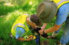 Volunteers in Park (VIP's) drilling wood sign to post (ManassasNPS) Tags: tree history nature girl nps volunteers run bull scouts manassas witness manassasnps