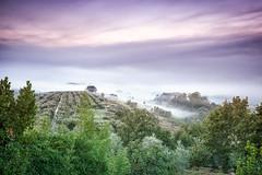 tuskany morning fog